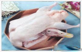 专业樱桃谷鸭、白条鸭、冷冻鸭、分割鸭等各类鸭产