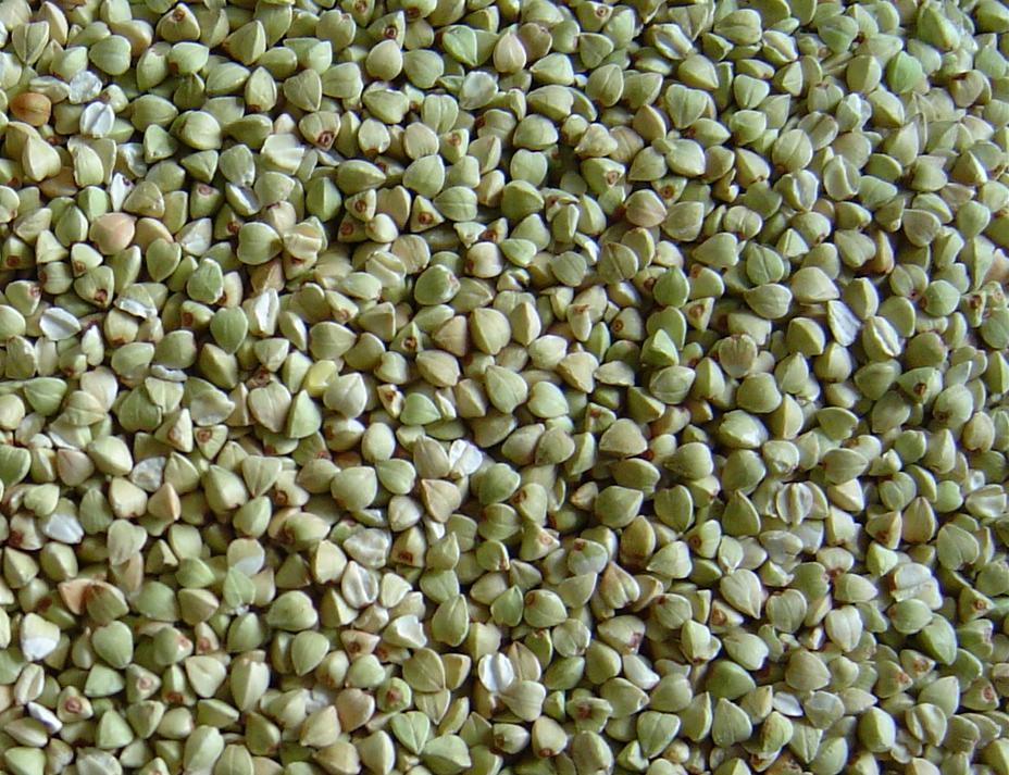 Buckwheat Zydeco - The Best of Buckwheat Zydeco