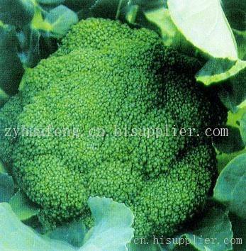 进口西兰花种子-海商网,植物种籽产品库