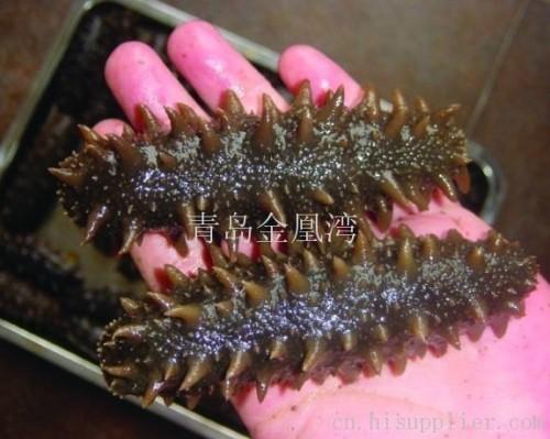 海参是生活在海边至8000米的海洋软体动物