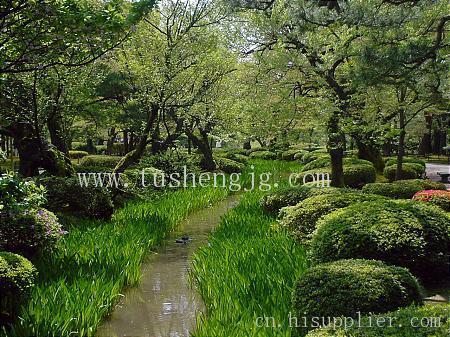日式小庭院植物配置
