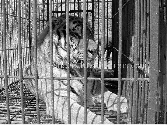 动物园电焊网笼子