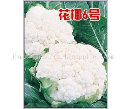 花椰 6号,耐热耐湿高抗病的优质花椰种子