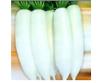 白美玉-萝卜种子,高产的、杂交的,销售好的,济南睿袤农业科技开发有限公司