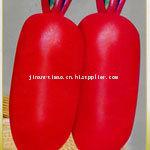 红萝卜种子3号--优质的,杂交的,销路好的,济南睿袤农业科技开发有限公司