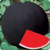 睿优无籽一号西瓜--优*的、杂交的、产量高、销路好的、抗病性好的西瓜种子