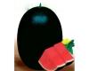黑霸--优*的、杂交的,抗病强的,济南睿袤农业科技开发有限公司