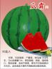 睿优瓜霸--优*的,杂交的,抗病强的、销售好的、济南睿袤农业科技开发有限公司