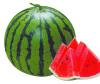 睿优红抗--优*的,杂交的,抗病强的,销售好的,济南睿袤农业科技开发有限公司