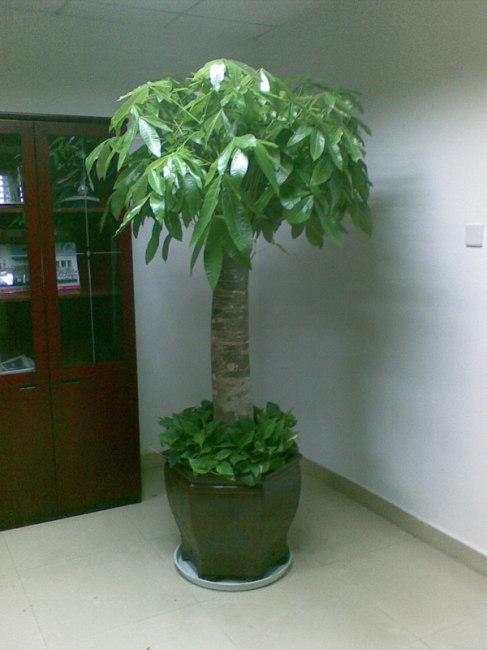 厦门室内植物租摆