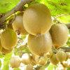 高效農業種植項目