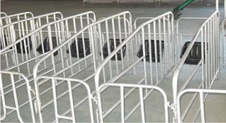 猪围栏-母猪单体栏