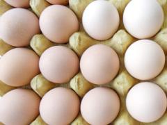 万博max手机版蛋品供应店