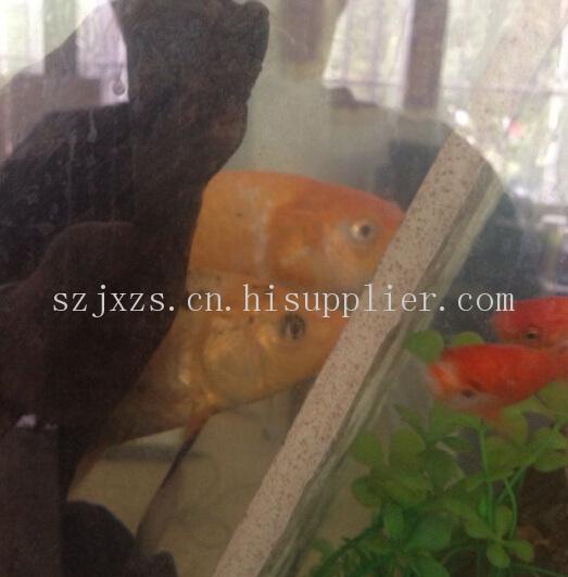 苏州办公室装修金鱼缸的布置