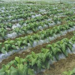 贵州农业膜批发价格