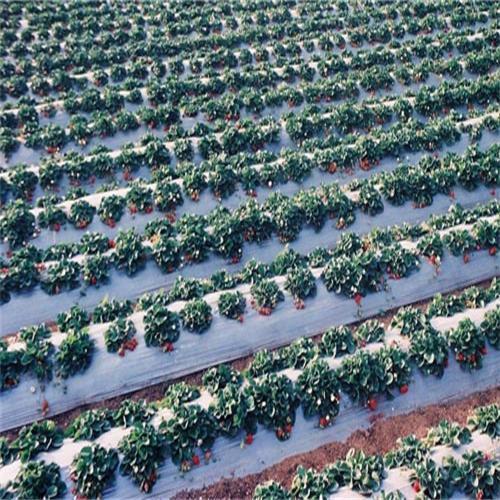 灌水多功能地膜實現了按植物根係分布立體灌水