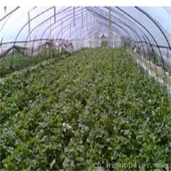 贵阳蔬菜大棚膜