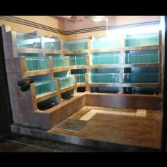 漳州海鲜池制作