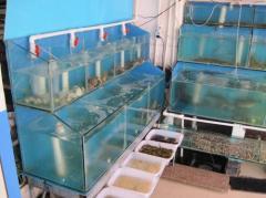 龙岩海鲜池制作