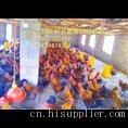 贵阳土鸡养殖场