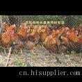 贵阳家禽养殖场