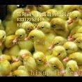贵阳家禽养殖