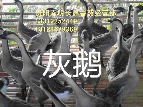 贵州放养鹅场地需求条件