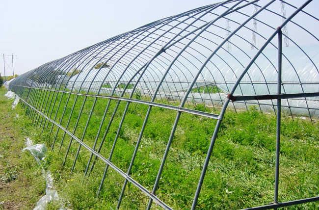 温室大棚适合种植什么果树答:果树种植已进入温室大棚,而且取得了较为