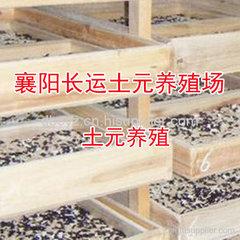 地鳖虫粉功效及食用方法