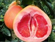 红心柚不但营养价值高