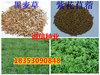 滄州哪裏有賣牧草種子的多少錢一斤