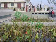 贵阳人工湿地