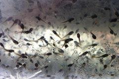牛蛙繁育基地