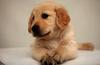 贵阳宠物医院教你怎么看狗狗的年龄