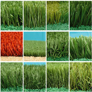 人造草坪是什麽?