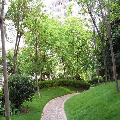 貴州綠化工程