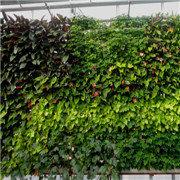 貴陽植物墻制作公司