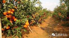 眉山市鳌山水果种植专业合作社