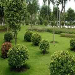 貴陽園林綠化造景工程