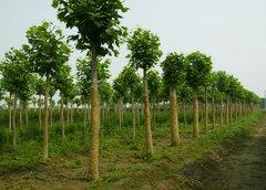 貴陽綠化養護