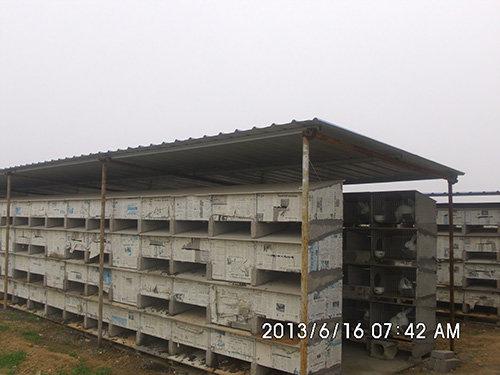 山东地板砖兔笼制作|专业的地板砖兔笼