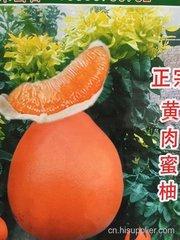 红金三号柚子苗批发哪家树种好