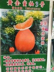 红金三号柚子苗种植场在哪