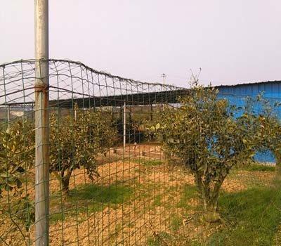 眉山养殖七彩山鸡的市场前景分析