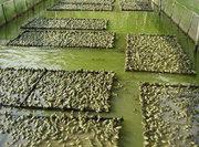 倾心研发饲料喂养 覆盖全部养殖过程