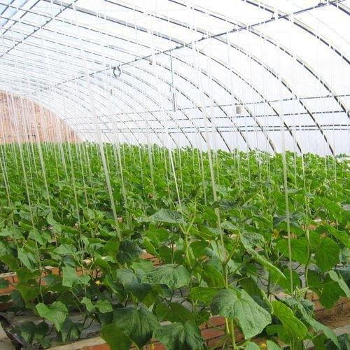 温室大棚建设哪家最好 蔬菜大棚种植技术培训哪家好 寿光泽农就不错