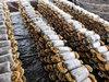 食用菌栽培新技术