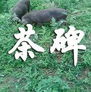 生态猪肉开始接受预定啦!