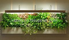 西安室内植物墙做法