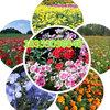 庭院适合种植什么花草种子哪里卖